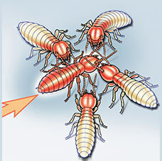 Termite Transferring Premise to Others